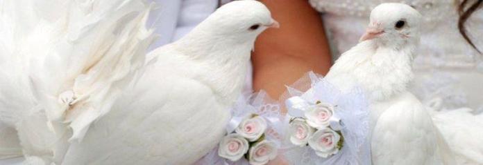 Голуби на регистрацию брака Долгопрудный