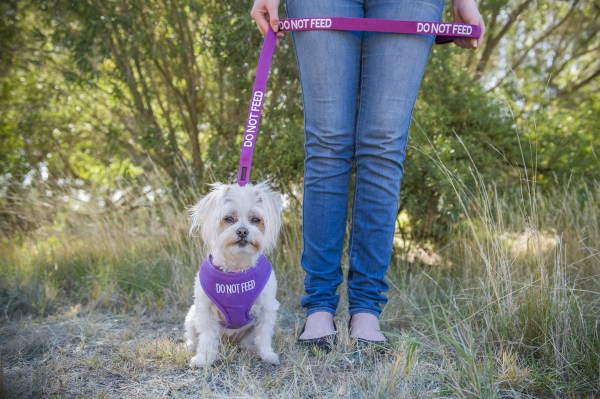 Friendly Dog Collars Do Not Feed Small Vest Harness and Medium Length Lead - Polish and Paws