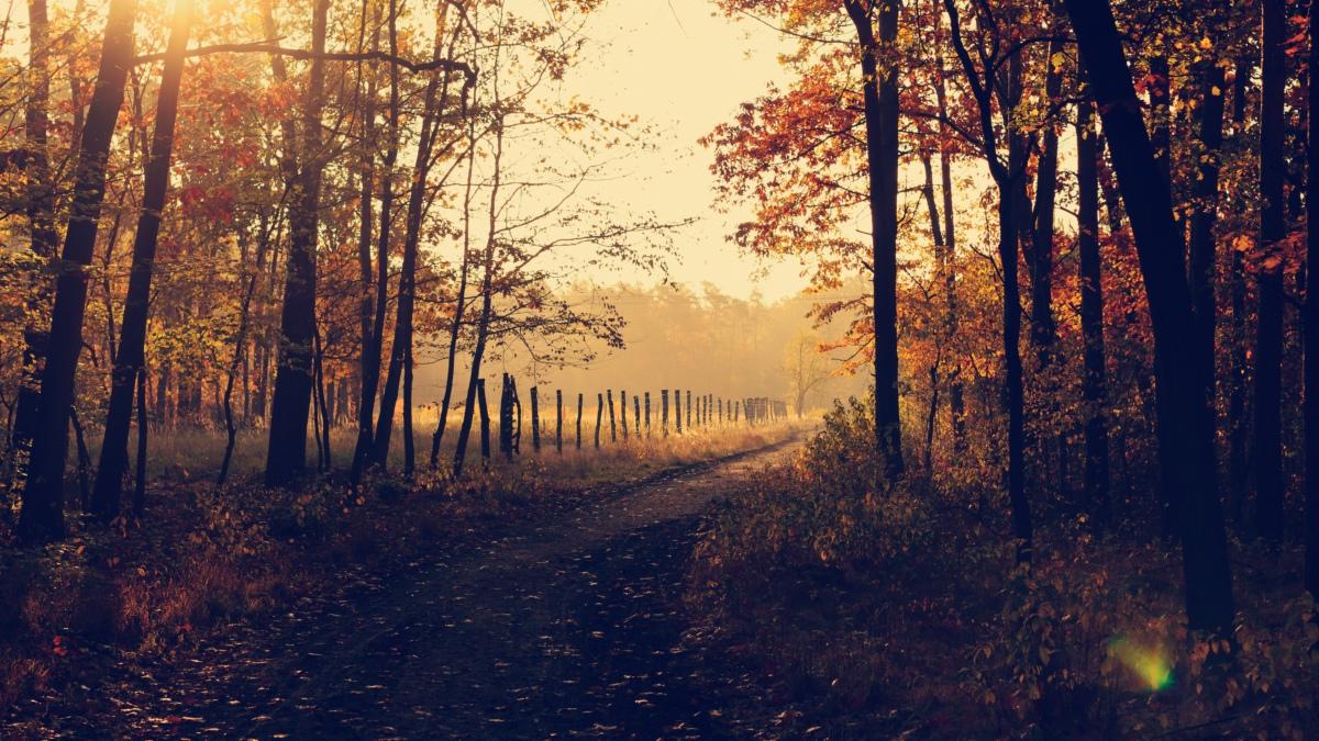 trail in Poland