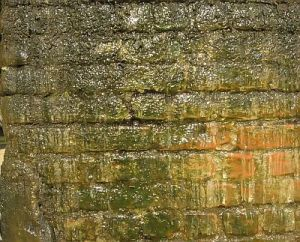 how to treat a damp wall image