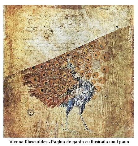 viennadioscorides-cover_1