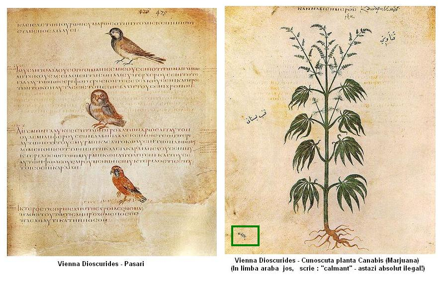 manuscrise celebre vienna dioscurides politeiaworld rh politeia org ro manual limba araba manual limba araba pentru incepatori