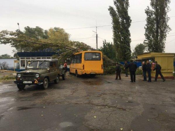 На Одесчине дерево обвалилось на пассажирский автобус ...