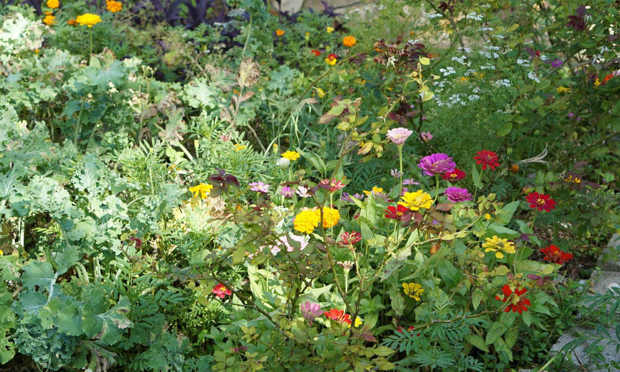 Ecnomics of growing food