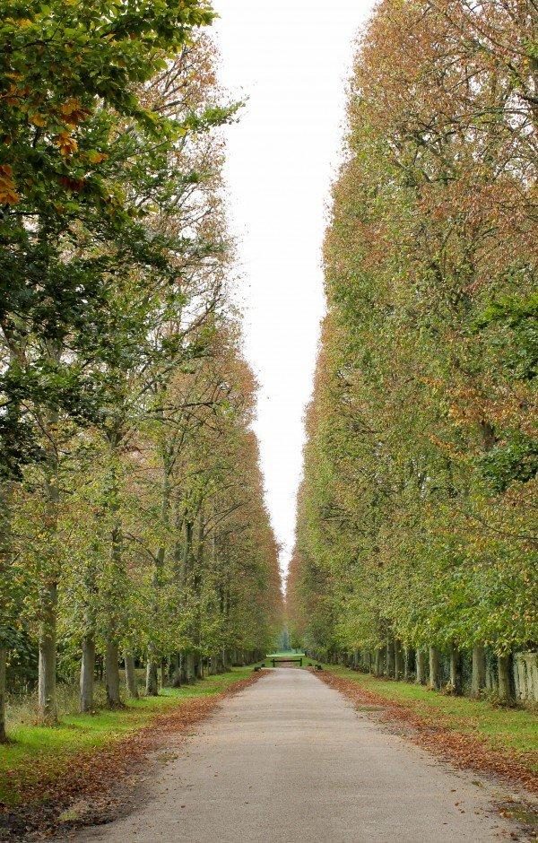 Versailles Oaks