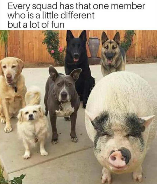 we-all-have-that-one-friend-stands-out-but-fun-dogs-pigs