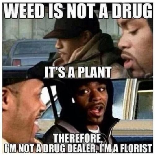 im-not-a-drug-dealer-im-a-florist-marijuana-plant