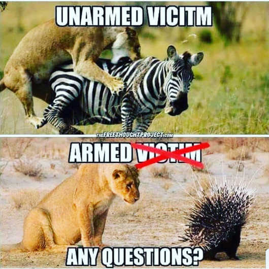 unarmed-vitim-armed-one-lion-porcupine