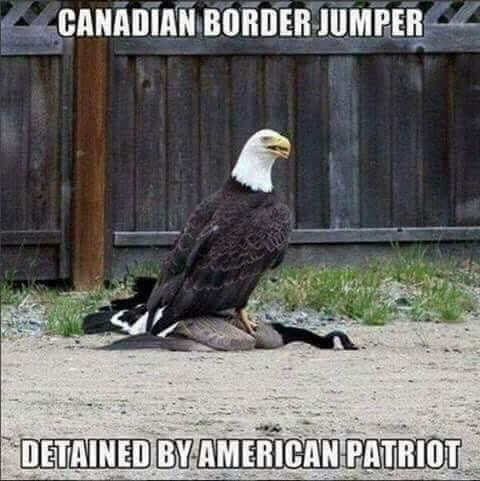 canadian-border-jumper-stopped-by-american-patriot-eagle