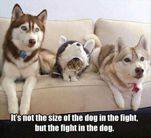 its-not-the-size-of-dog-in-fight-but-fight-in-dog-cat-costume