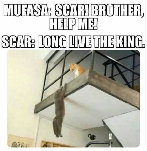 lion-king-cats-scar-borther-help-me