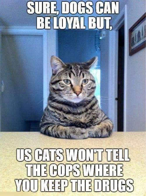sure-dogs-can-be-loyal-us-cats-wont-tell-cops-where-you-keep-the-drugs