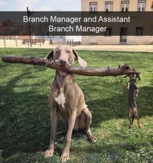 branch-manager-and-assistant-dogs-hanging