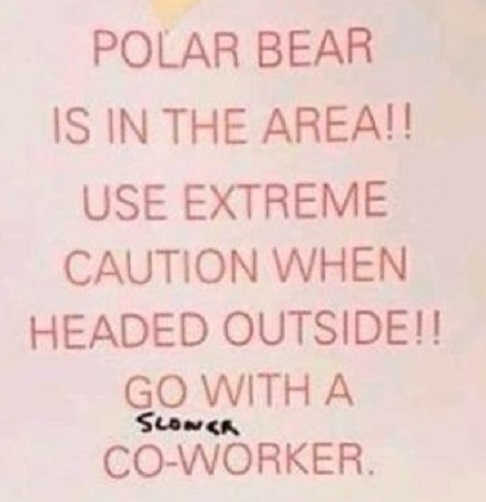 polar-bear-in-area-use-extreme-caution-go-with-slower-co-worker