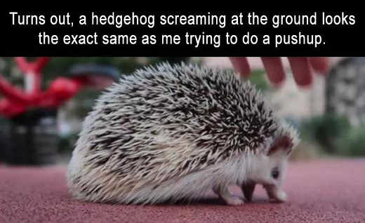 hedgehog-screaming-exact-me-doing-pushups