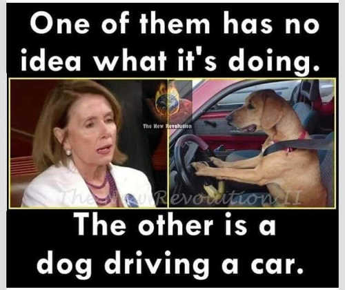 one of them has no idea what theyre doing other is dog driving car nancy pelosi