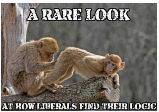 rare look at how liberals find their logic monkeys ass