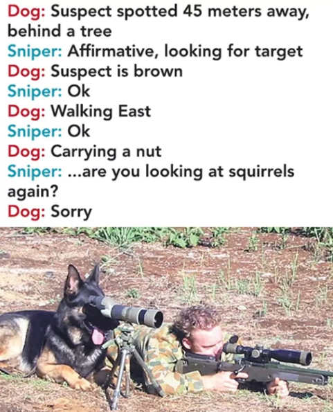 dog on scope sniper are you looking at squirrel again