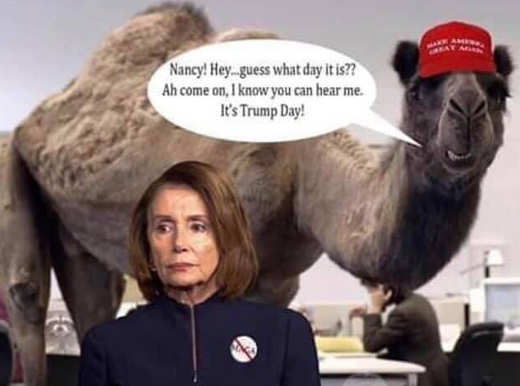 nancy pelosi guess what day it is trump day camel
