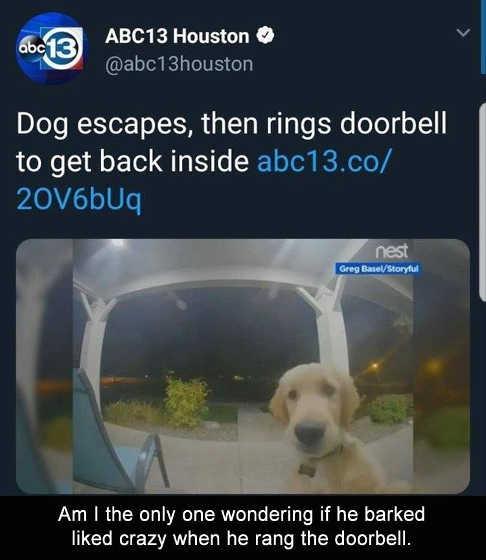dog locks self out rings doorbell barks