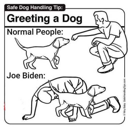 dog safe handling normal people joe biden