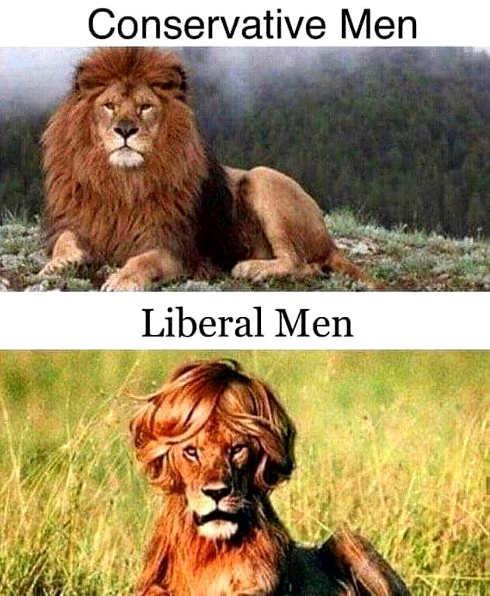 lions conservative men vs liberal men