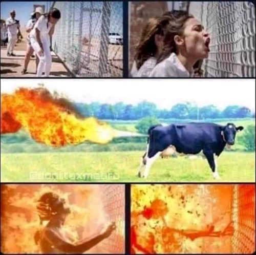 aoc terminator explosion fence cow fart