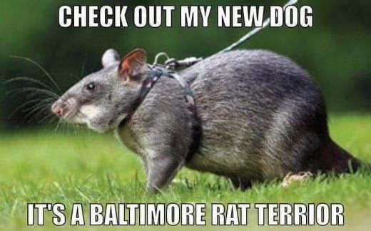 check out my new dog baltimore rate terrior