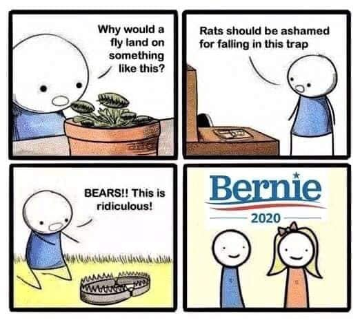 why would fly rats bear get caught in trap liberals bernie 2020