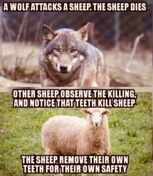 wolf attacks sheep other sheep remove own teeth for own safety