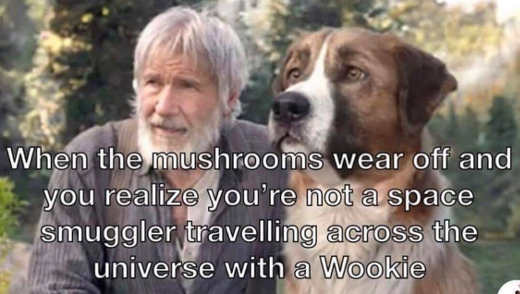 when mushroom wears off realize you were not space smuggler harrison ford dog
