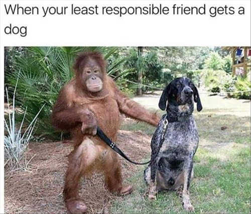 when your least responsible friend gets dog ape