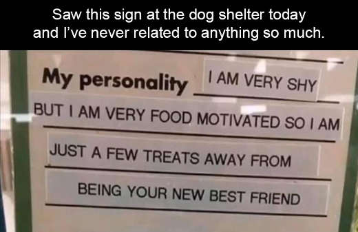 dog shelter my personality very shy food motivated few treats from best friend