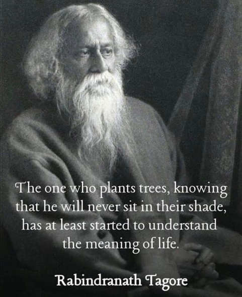 quote one who plants tree knowing never sit it shade understands meaning of life