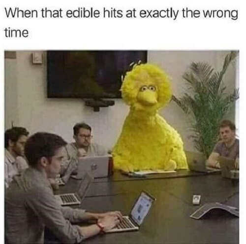 when edibles hit at exactly the wrong time big bird business meeting