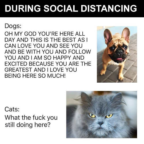 during social distances dogs love you here so much cats what the fuck you doing here