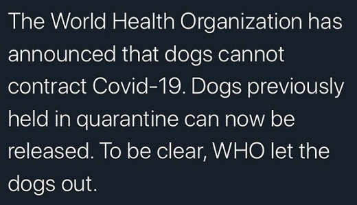world health organization dogs cant contract covid 19 who let the dogs out