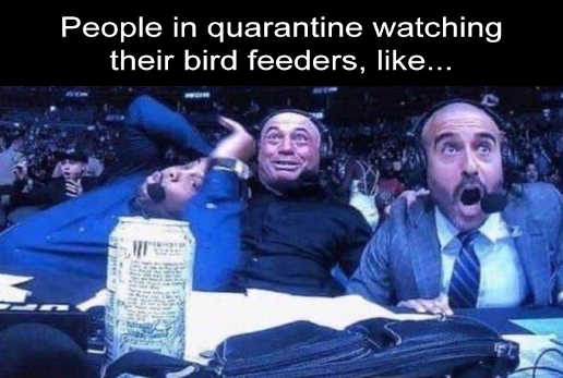 people in quarantine watching bird feeders excited sports announcers