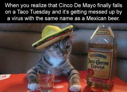 when you realize cinco de mayo on taco tuesday messed up virus name as mexican beer