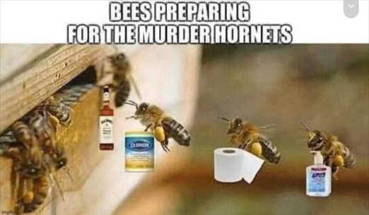 bees preparing for murder hornets toilet paper purell clorox