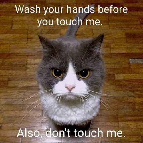 cat wash your hands before you touch me also dont touch me