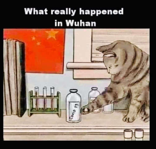 what really happened in wuhan cat knocking covid jar off counter
