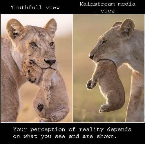 truthful view mainsteam media lion cub mouth