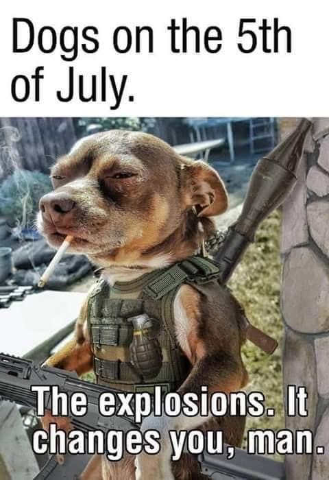 dogs on 5th of july explosions changes you guns rocket launcher