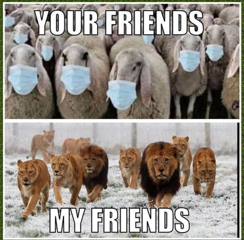 your friends sheep wearing masks my friends lions