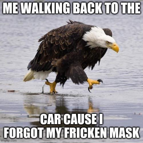 bald eagle me walking back to my car because forgot mask