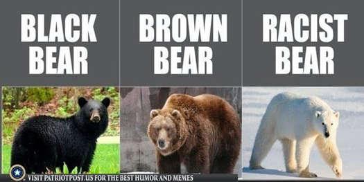 black bear brown racist polar beer