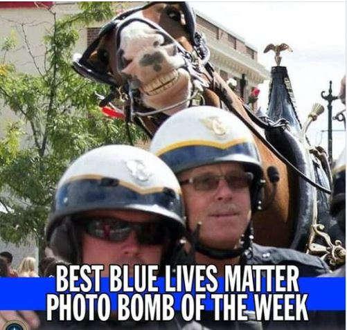 best blue lives matter photo bomb of week horse