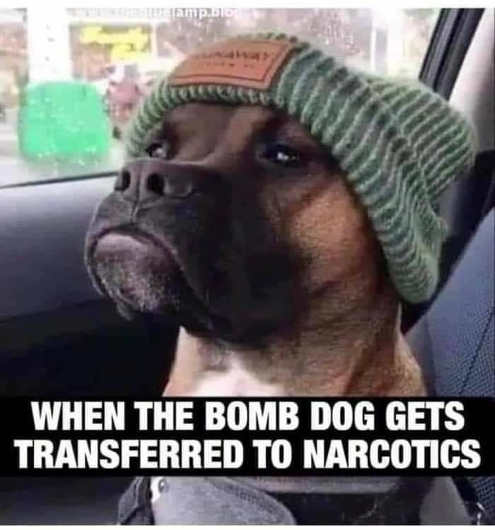 when bomb dog gets transferred to narcotics cap