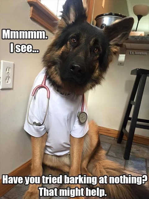 advice of the day dog have you tried barking at nothing that might help